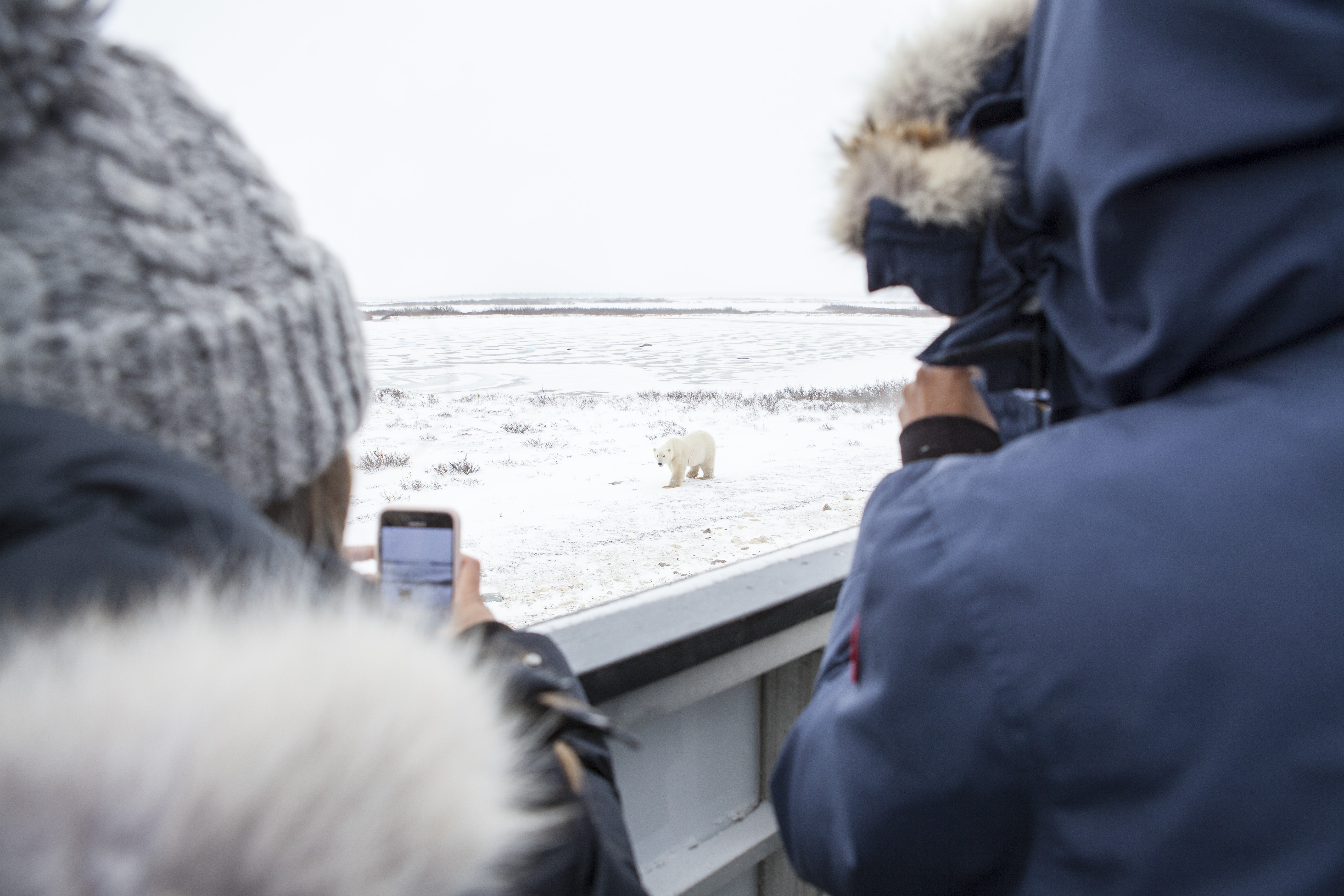 Guests viewing polar bears in the Churchill Wildlife Management Area.