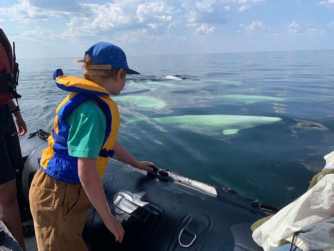 A guest on a boat tour viewing beluga whales in the Churchill, River